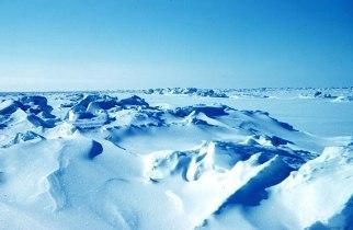 Отличие Арктики от Антарктики
