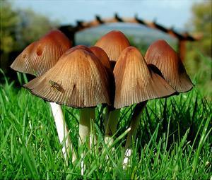Отличие грибов от растений