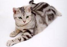 Отличие кота от кошки