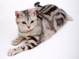 Как отличить кота от кошки