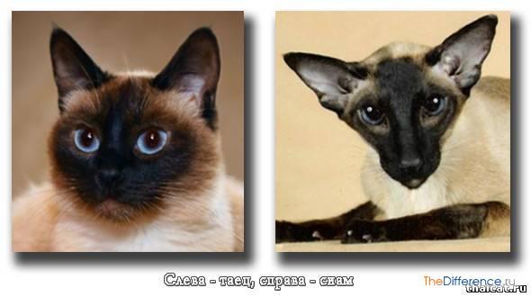 Различия между котом и кошкой