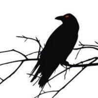 Отличие ворона от вороны