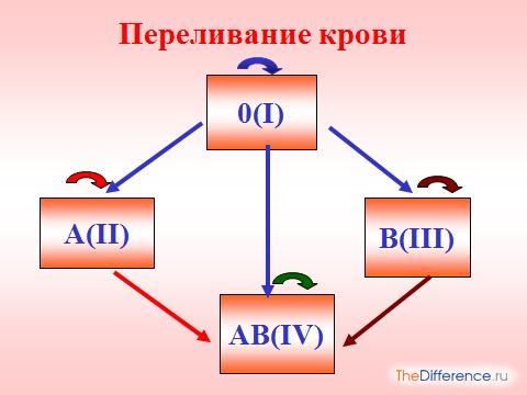 отличие групп крови