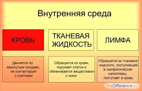 отличие крови от лимфы