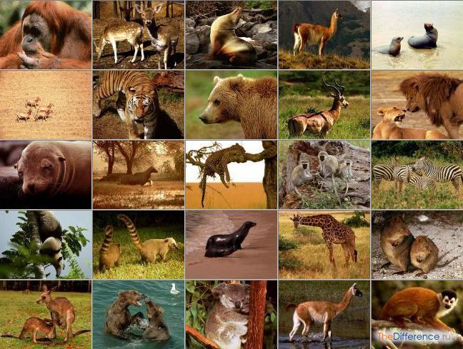 отличие млекопитающих от пресмыкающихся