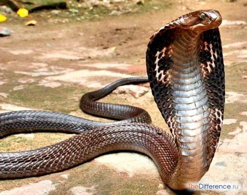 отличие змей от ящериц