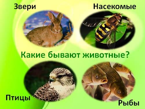 отличие зверей от животных