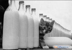 Разница между пастеризованным и стерилизованным молоком