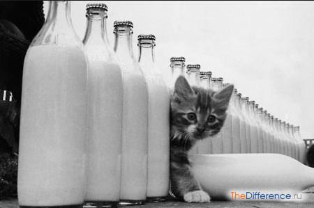 отличие пастеризованного молока от стерилизованного
