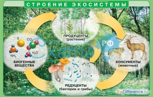 отличие агроэкосистемы от экосистемы