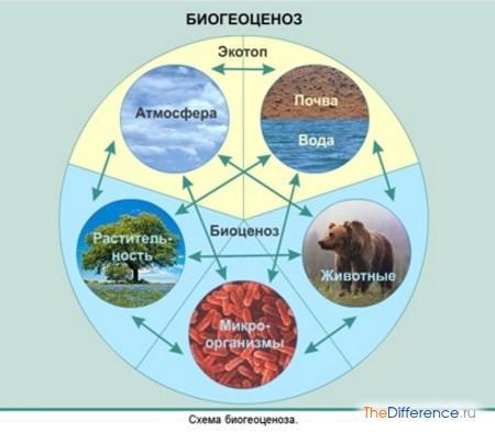 отличие биогеоценоза от экосистемы
