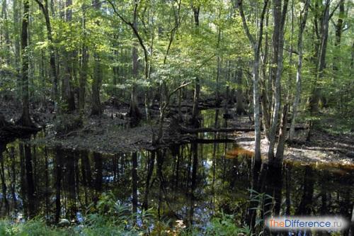 разница между болотом и озером