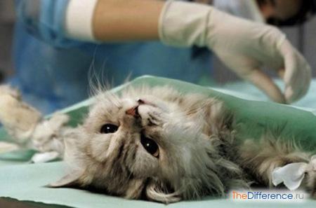 отличие кастрации от стерилизации кошек