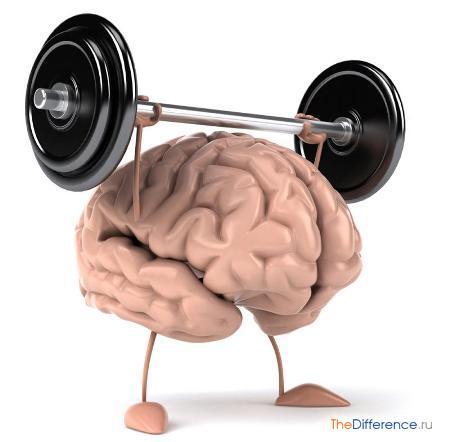 отличие мозга человека от компьютера,