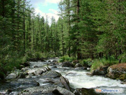 отличие тайги от смешанных лесов
