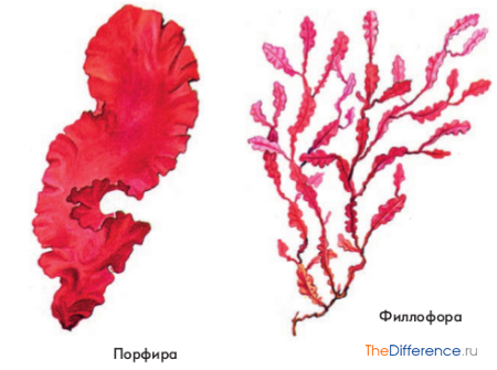 разница между мхами и водорослями