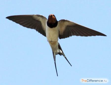 отличие птиц от млекопитающих