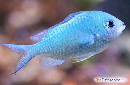 отличие рыб от других животных