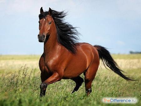 отличие понятия конь от понятия лошадь,
