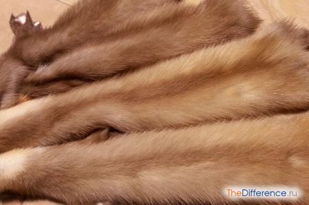 разница между мехом соболя и мехом куницы