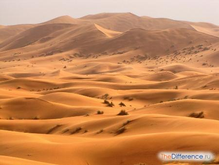 отличие пустыни от степи