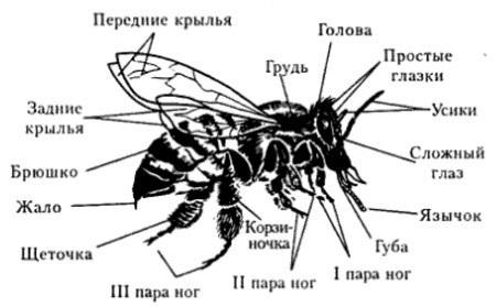 разница между пауками и насекомыми
