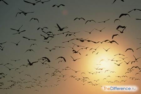 отличие птиц от животных