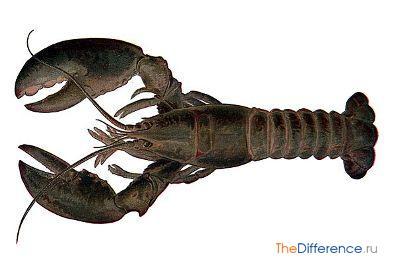 отличие омаров от лангустов