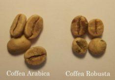 Разница между арабикой и робустой