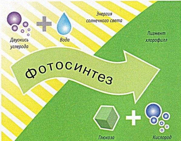 отличие фотосинтеза от хемосинтеза