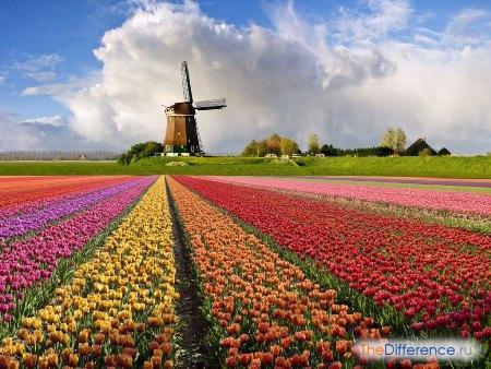 отличие Голландии от Нидерландов
