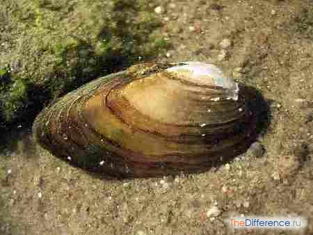 отличие моллюсков от червей