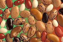 разница между бобами и фасолью