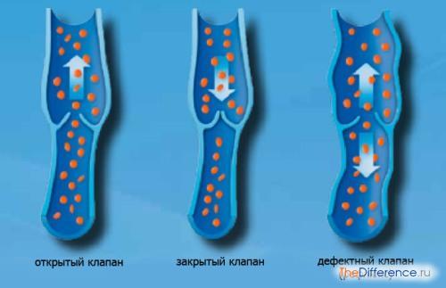 клапаны, расположенные внутри вен