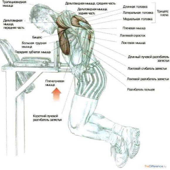 Как можно накачать мышцы в домашних условиях