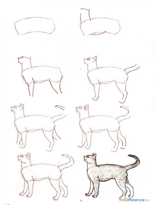Как нарисовать легко и красива кота