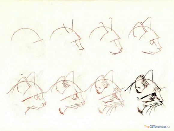 Как рисовать кота легко