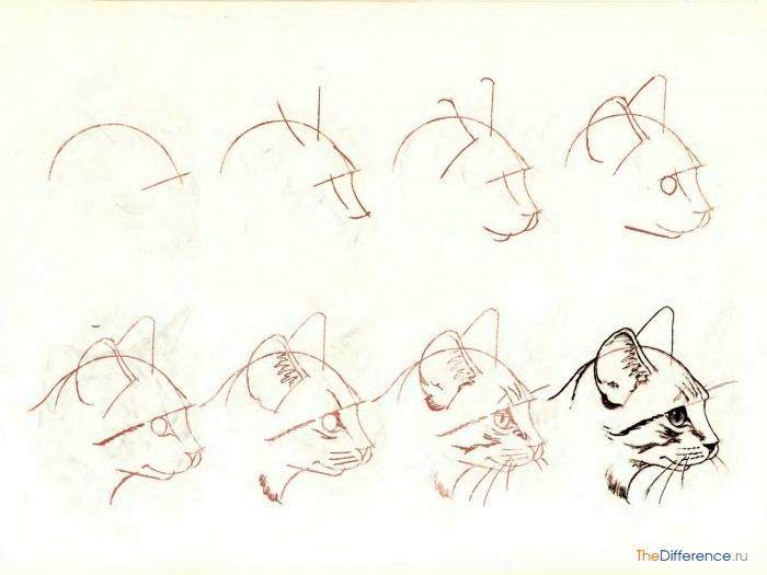 Картинка носа для детей