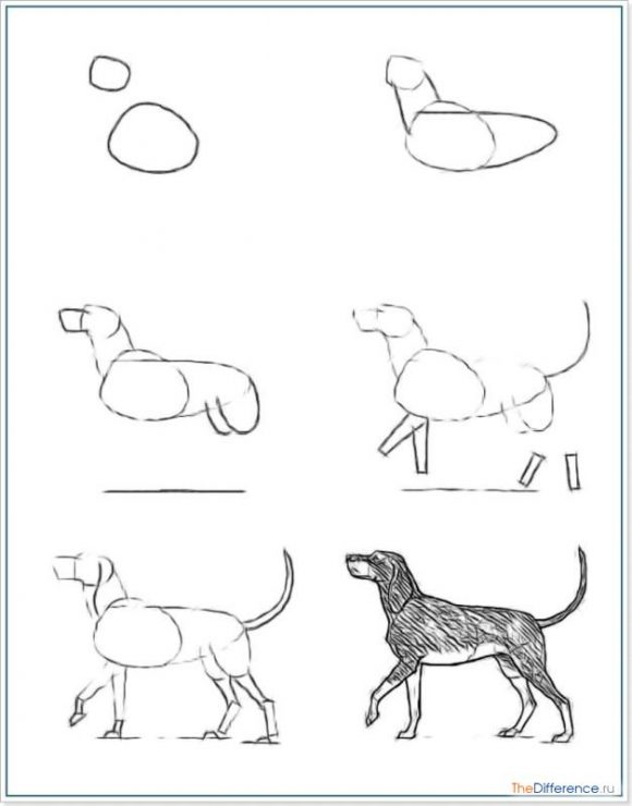 Нарисовать собаку поэтапно карандашом