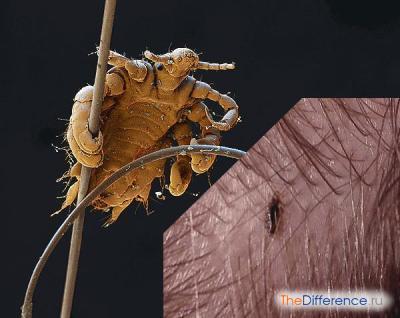 паразиты в коже лица человека лечение