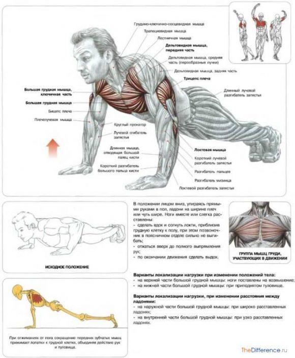 быстро накачать грудные мышцы