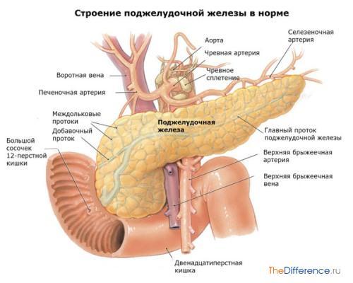 Как лечить поджелудочную железу