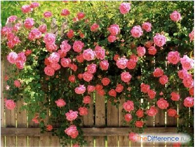 самым красивым цветам на Земле.