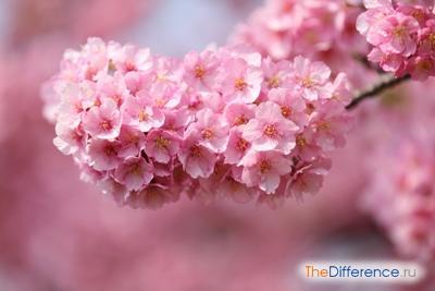 Самый красивый цветок в мире