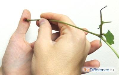 Как лечить бородавки