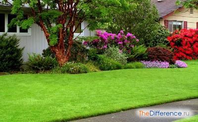 как правильно посадить газонную траву