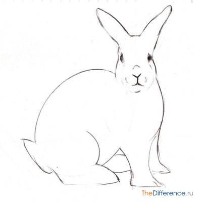Схема рисунка кролика