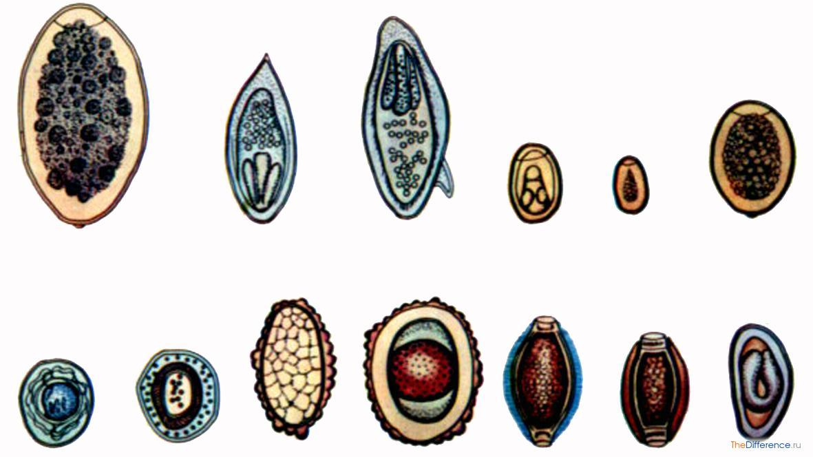 уничтожение паразитов в организме аюрведа