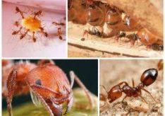 Как бороться с муравьями в квартире?