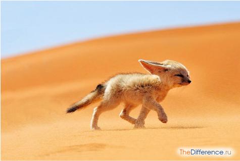 какая собака самая маленькая в мире
